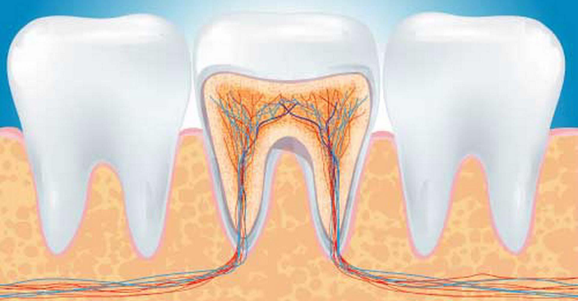 Odontoiatra Ferrara Dentista Ferrara Studio Odontoiatrico Dott. Nicola Mobilio Prestazioni - Igiene orale Endodonzia